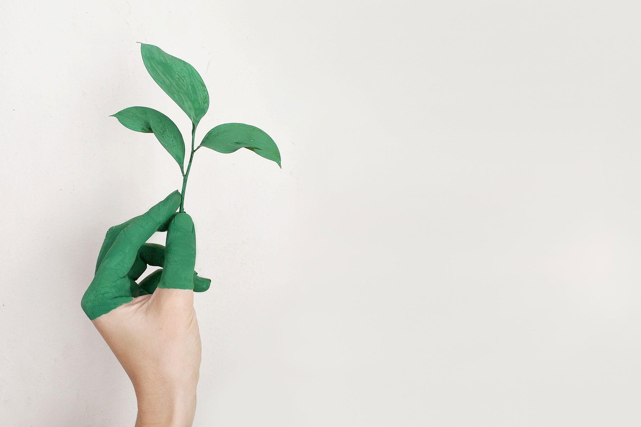 Sustentabilidade Doméstica: substituição de produtos para gerar menos lixo na sua casa